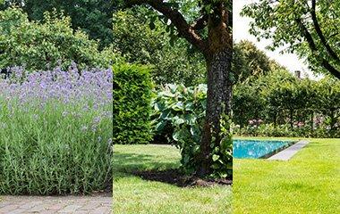Atmosphäre für deinen Garten